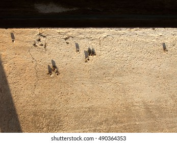 Rusty nails on sunny wall