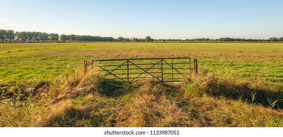 Rusty old iron gate in front of a Dutch meadow. It is in the beginning of the evening of a hot summer day. The grass is yellow and dry due to a long period without rain.