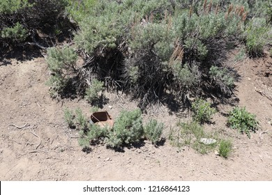 A rusty old pan in the dirt next to some sagebrush in Utah county