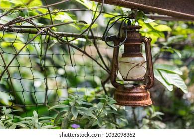 rusty petrol lamp in a jungle