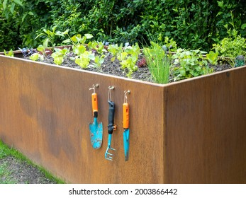 rusty raised bed with young vegetable plants after rain