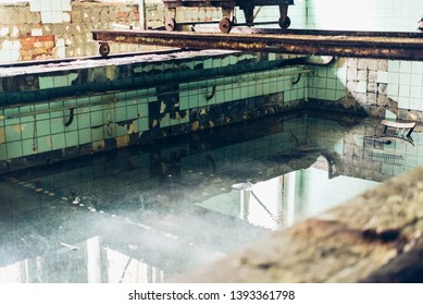 Rusty swimming pool in dead abandoned ghost town of Pripyat, Chernobyl NPP exclusion zone, Ukraine - Image