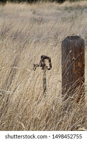 Rusty water spigot surrounded by cheatgrass in Hermiston, Oregon