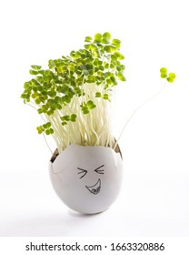 Rutabaga sprouts in egg shell on white background. Easter decoration. Gardening concept. Concept of beginning of life.