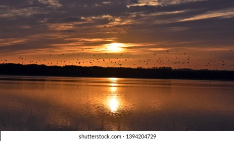 Rutland UK oct 17 2019 Roosting Birds at sunset over Rutland Water, one of the largest man made lakes in Western Europe & supports a large population of wildlife