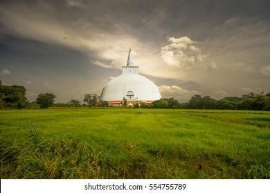 Ruwanweliseya Dagoba buddhist stupa tourist and pilgrimage site. Anuradhapura, Sri Lanka on the edge of green paddy field