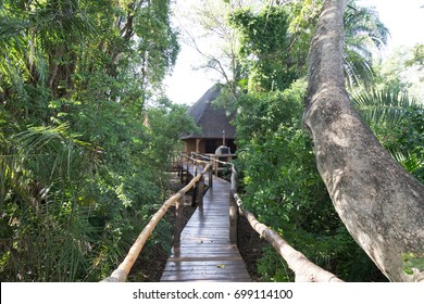 Ruzizi Tented Lodge, RWANDA - FEBRUARY 7, 2017: A raised walkway at the eco-lodge lifts visitors and prevents wildlife encounters with Hippos, who come up to feed on papyrus at night.