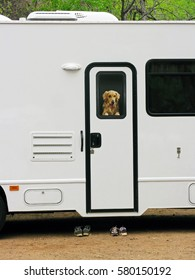 RV Traveler - A dog looking out the door window in a RV. Looks realistic but actually is an image attached to door.