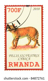 RWANDA - CIRCA 2010: A stamp printed in Rwanda showing African Wildcat, circa 2010