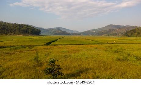 Rwanda landscape, agriculture, Rwanda tea