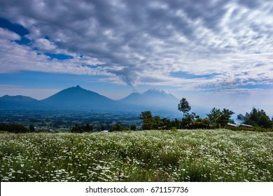 Rwanda, Volcanoes National park, majestic landscape, mountains, fields of chamomile and dramatic clouds