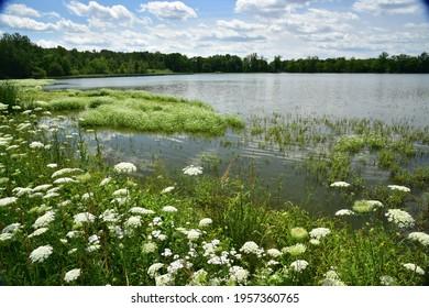 Rybniky Jizni Cechy, Ponds of Southern Bohemia - Shutterstock ID 1957360765