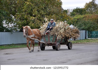 Rydoduby - Chortkiv - Ternopil - Ukraine - October 13, 2017. Street village Rydoduby coachman manages four-wheeled cart, loaded with cornflakes and harnessed by one horse