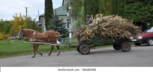 Rydoduby - Chortkiv - Ternopil - Ukraine - October 13, 2017.Street village Rydoduby firman manages four-wheeled cart, loaded with cornflakes and harnessed by one horse