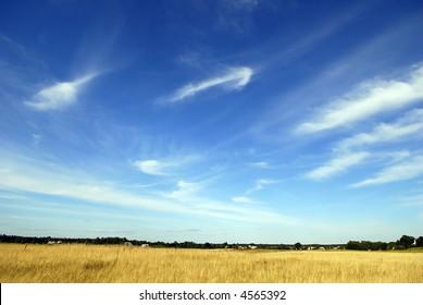 the rye field under beautiful sky