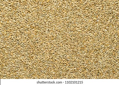 Rye grains, surface and background. Secale cereale, grain, cover and forage crop. Member of wheat tribe. Used for flour, bread, beer, whiskey, vodka and animal fodder. Food photo, close up from above.