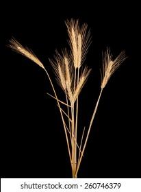 rye isolated on black