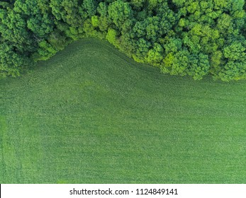Ryegrass Field Next to Forest Top Down Aerial View