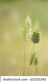 Ryegrass, selective focus and diffused background