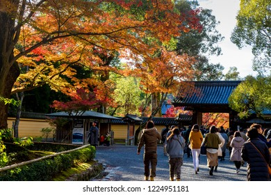 Ryoan-ji Temple, Kyoto Prefecture, Japan - November 2017 : Ryoan-ji Temple is the most beautiful Zen Garden and Fall Foliage of Red maple leaf leaves in Autumn