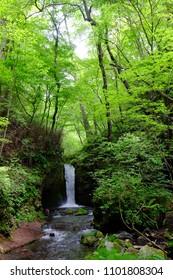 Ryugaeshi falls surrounded by fresh green, Karuizawa, Nagano, Japan