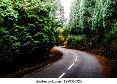 S shape road in a dense forest