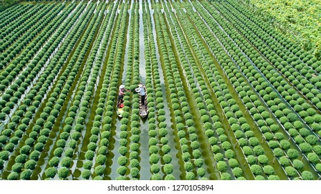 Sa Dec Flower Village in Dong Thap Province, Vietnam December 18, 2018, people are taking care of flowers. This is the oldest village specializing in growing flowers in Vietnam.