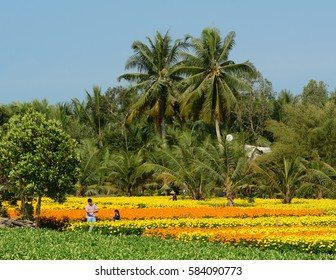 Sa Dec, Vietnam - Jan 31, 2016. Farmers working at the flower plantation at sunny day in Sa Dec, Vietnam. Sa Dec is a river port and agricultural center in southern Vietnam.
