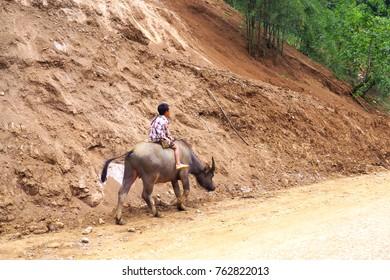 SA PA, LAO CAI, Vietnam - May 2017 : the Vietnamese Youngers Ridding the Buffalo on the Road in Sa Pa, Vietnam
