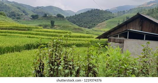 Sa Pa Ricefield Scenery