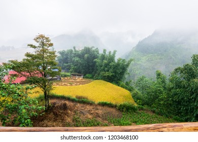 Sa Pa trekking view on the mountain along with the golden rice paddy filed terrace in Cat Cat village at Sa Pa,  Lao Cai Province, Vietnam