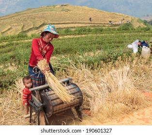 SA PA, VIETNAM - OCTOBER 4: An unidentified Hmong women and her son harvesting rice under sunlight on October 4, 2013.