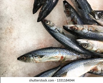 saba fish frozen ice small and large used in cooking and food animal saba fish is in the sea and is with nature