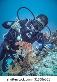 Sabah, Malaysia 19 Mac 2011 : Marine biologist checking coralreef on Mac 19 2011.