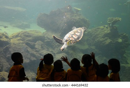 Sabah, Malaysia. April 28, 2016: Preschoolers greeted by a turtle kept in aquarium at University Malaysia Sabah Marine Museum. UMS is a local university that offers marine biology course.