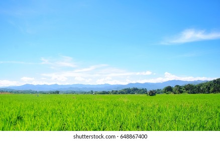 Sabah, Malaysia - May 26, 2017 : Views of the greenery of paddy fields in the early morning.