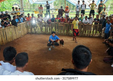 Sabang Palawan Philipines - March 24, 2014:Traditional cockfighting competitions in Palawan on March 24, 2014. Cockfighting is illegal in Philipines but permit are issued on certain condition.