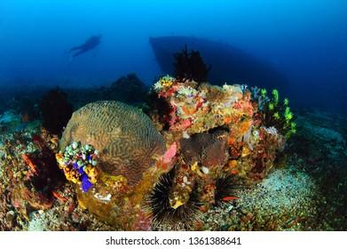 sabang underwater image philippines