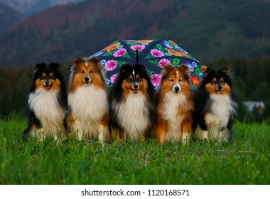 Little Dog Sitting In The Grass Images, Stock Photos