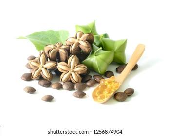 Sacha Inchi on white background, fresh capsule seeds fruit of sacha-Inchi peanut - Image, Sacha Inchi  green, brown Seed Sacha Inchi, Leaves, sacha inchi oil