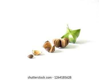 Sacha inchi on White background, Fish Oil, Omega3, Sacha inchi oil Capsule on Wooden spoon, fresh seeds fruit of sacha-Inchi, Leaves of Sacha inchi, peanut Sacha inchi green, Brown - Image