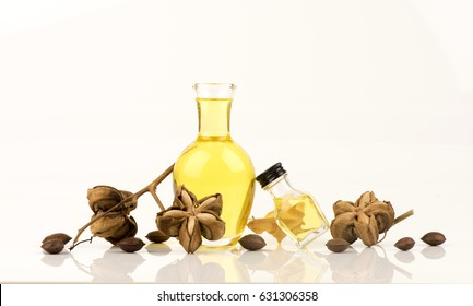 Sacha inchi, Sacha peanut, Inca peanut, Supra or Mountain peanut (Plukenetia volubilis L.) dry fruits and oil.