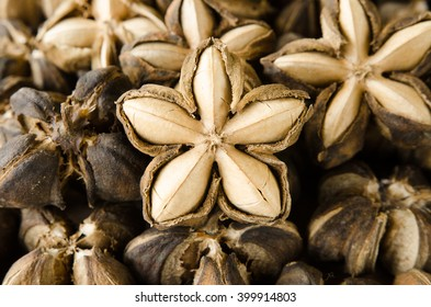 sacha inchi seeds