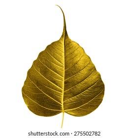 Sacred fig leaf isolated