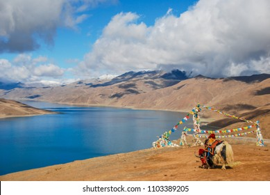 The sacred lake Yamdrok-Tso with blue transparent water and yak in the mountains of Tibet.