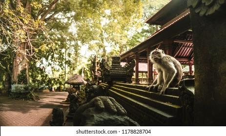 Sacred Monkey Forest Sanctuary, Ubud, Bali