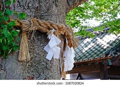 Sacred rope (Shimenawa) of Shintoism for worshipping god in Japanese shrine