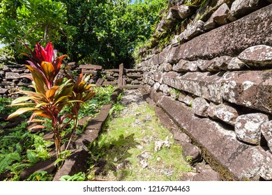 Sacred spiritual ti plant with red leaves (Cordyline fruticosa) inside town walls in Nandouwas part of Nan Madol - prehistoric ruined stone city built of basalt slabs. Pohnpei, Micronesia, Oceania.