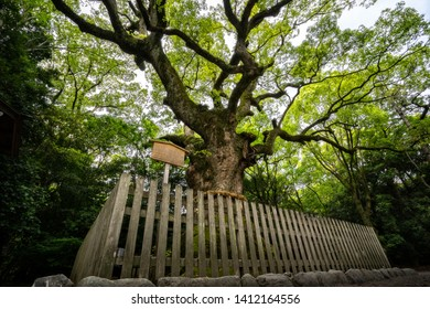 Sacred tree in Atsuta Shrine. Tsukazaki Giant Camphor Tree is 1300 years old.