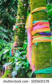 Sacred tree decorated with colorful Thai fabrics.